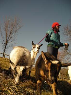 stylish goats